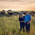 Craig Steck, Steck Cattle